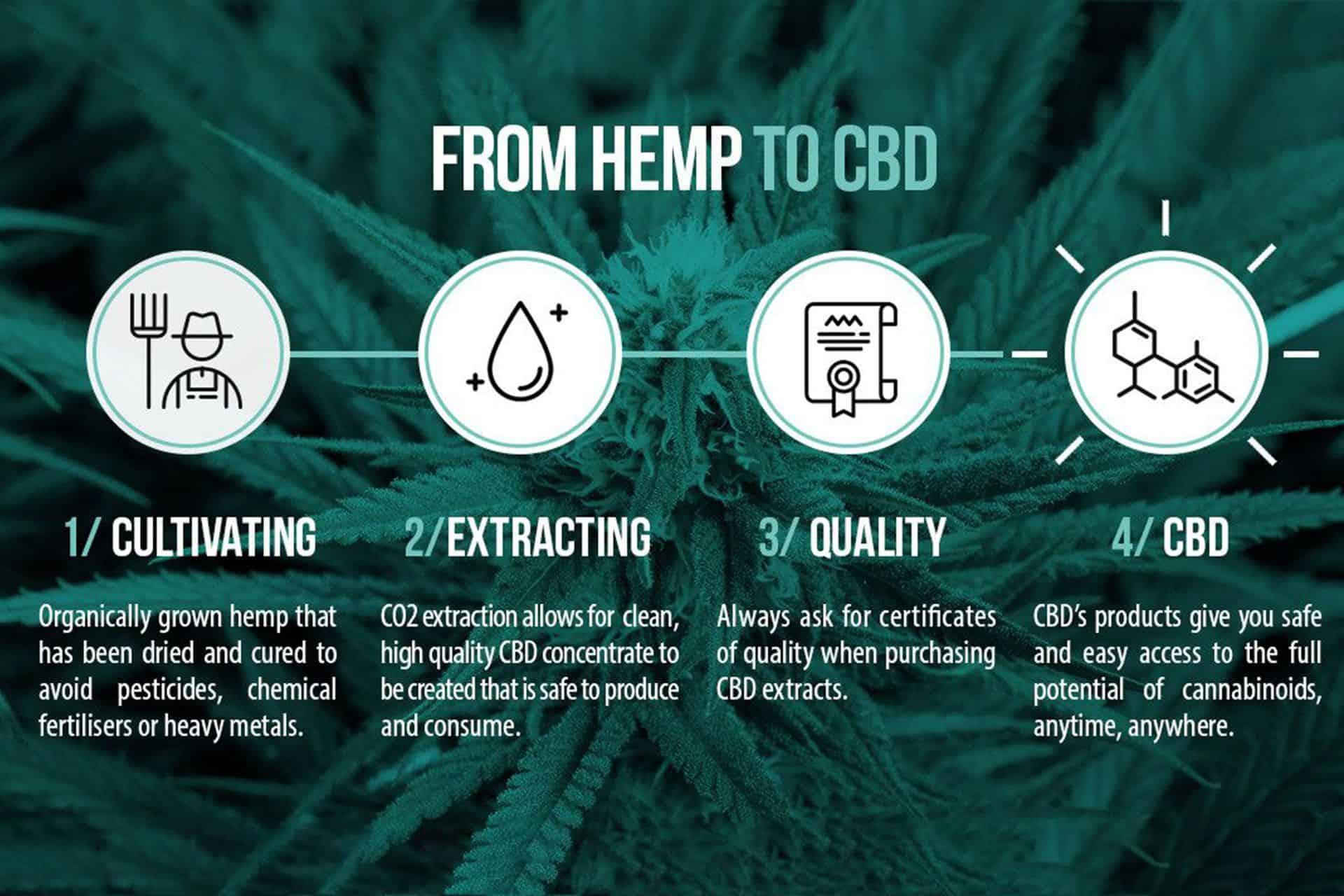 How is CBD extracted?