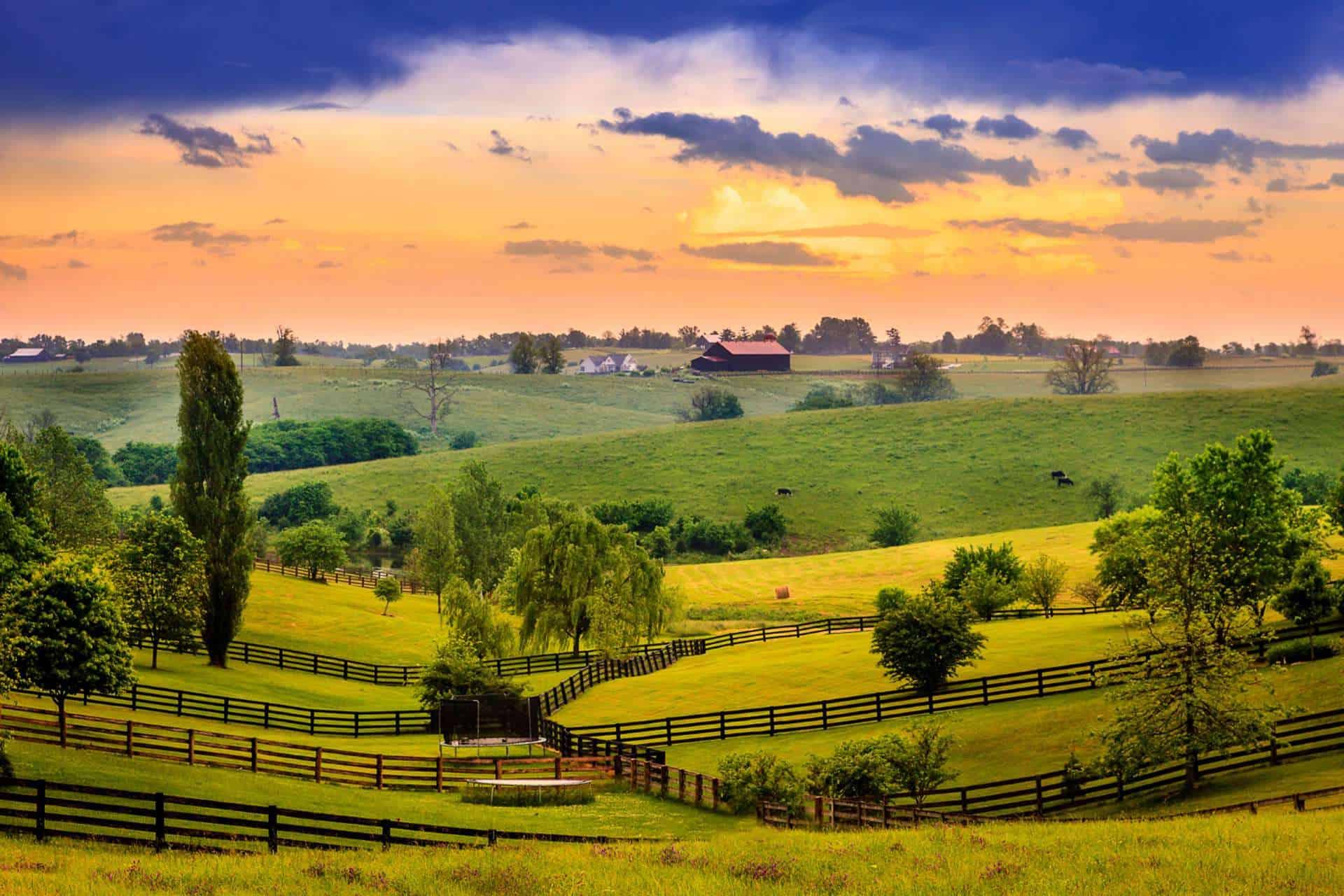 Where to Buy CBD Oil in Kentucky?